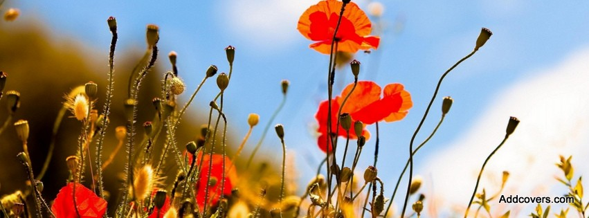 Red Poppy Flowers {Flowers Facebook Timeline Cover Picture, Flowers ...