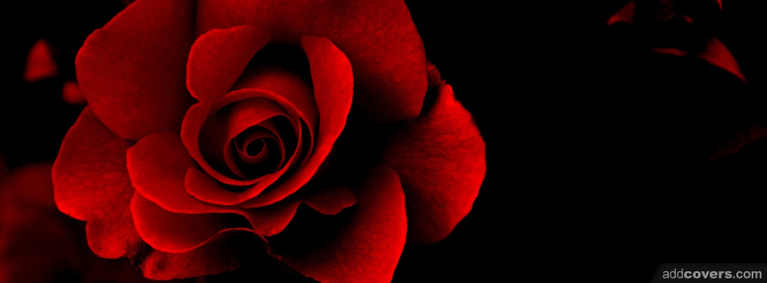 Red Rose {Flowers Facebook Timeline Cover Picture, Flowers Facebook ...